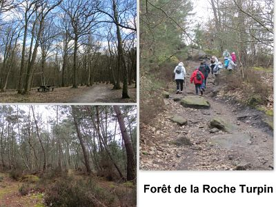 forêt roche turpin